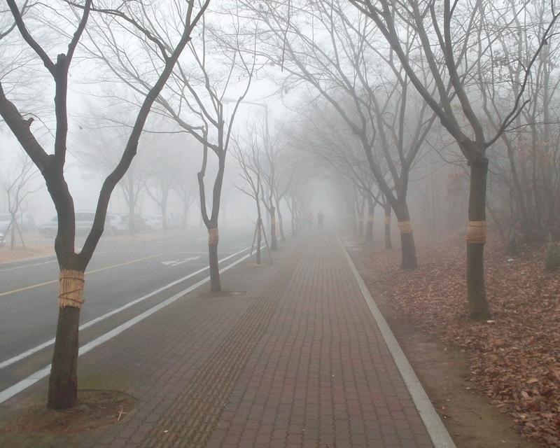 туман_4