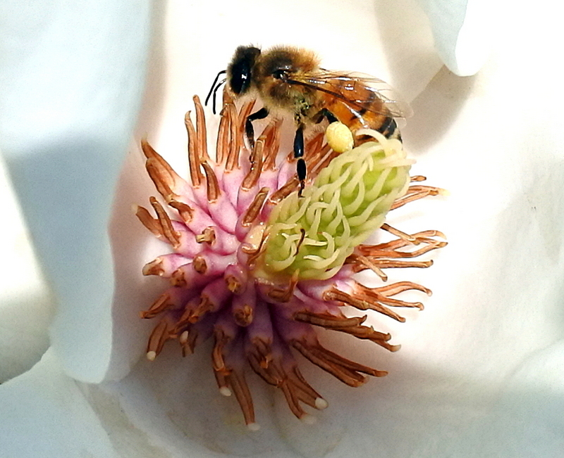 обед пчелы