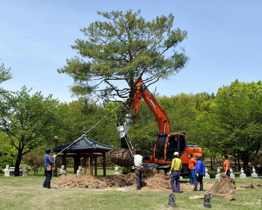 дерево_2