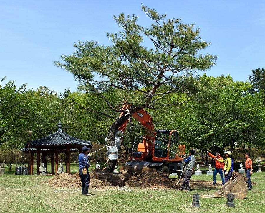 дерево_3