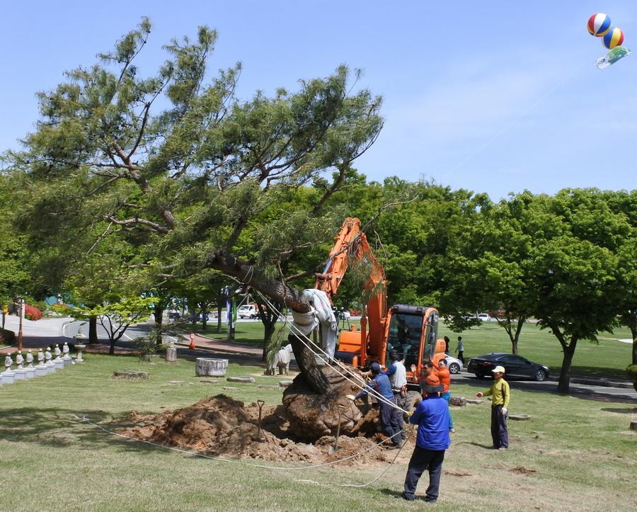 дерево_6