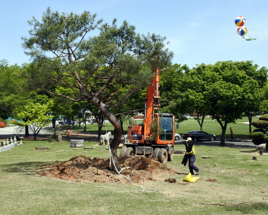 дерево_7