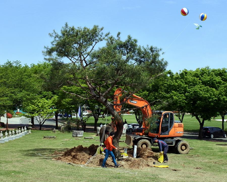 дерево_8