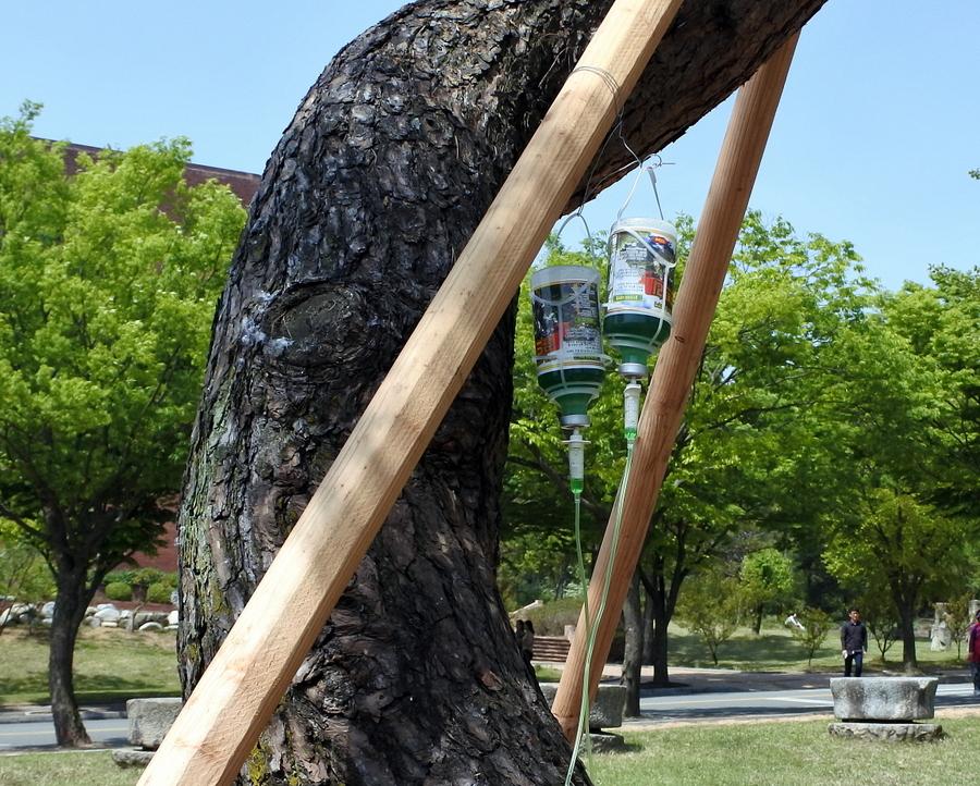 дерево_10