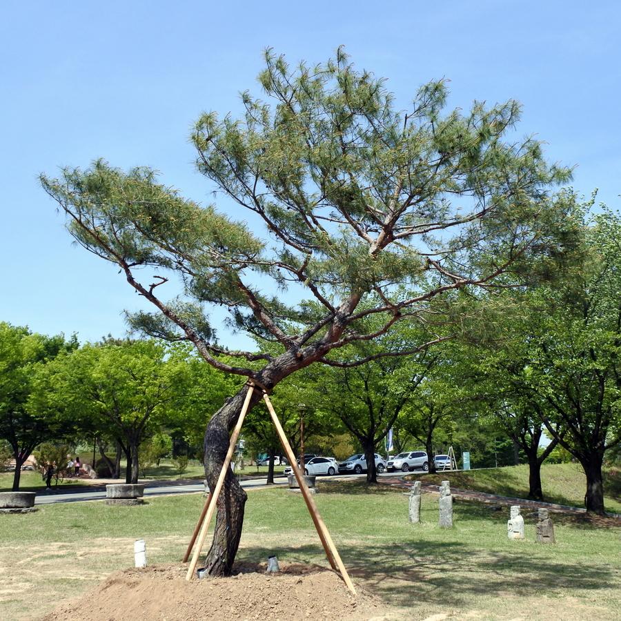 дерево_12