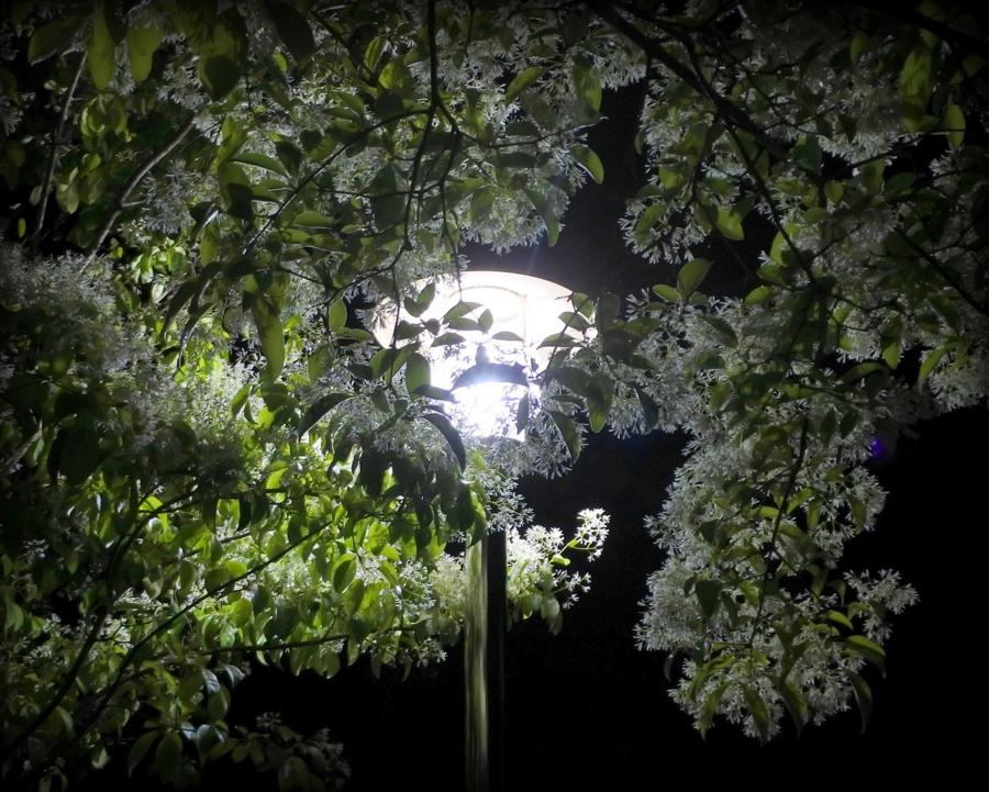 фонарь