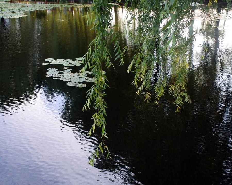 У пруда