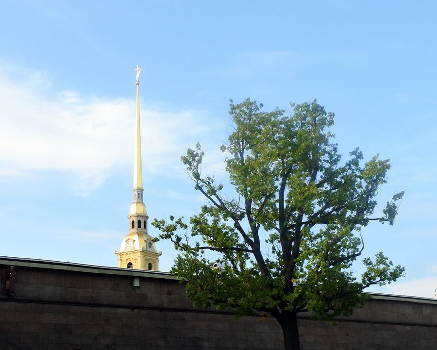 Собор и дерево