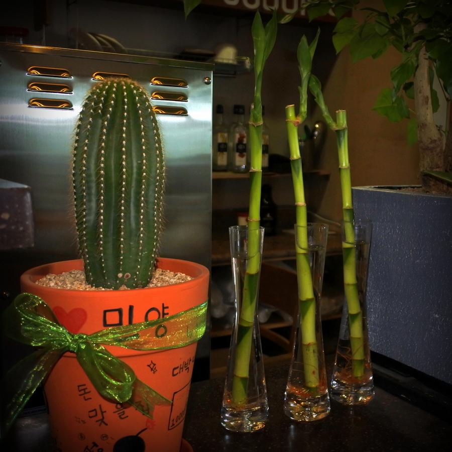 кактус и бамбук