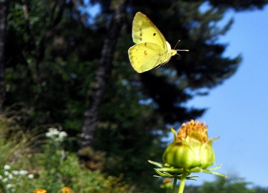 бабочка_2