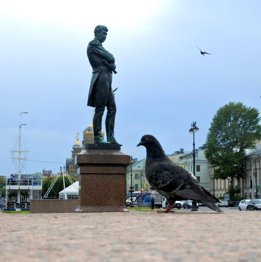 Крузенштерн и голубь