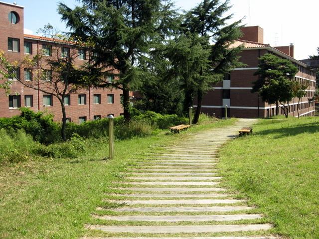 Университет Тэгу. Мощёная дорожка