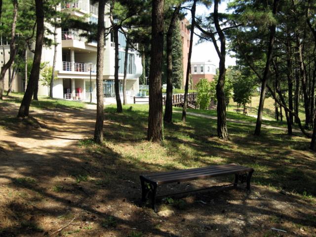 Университет Тэгу. Сосновый парк