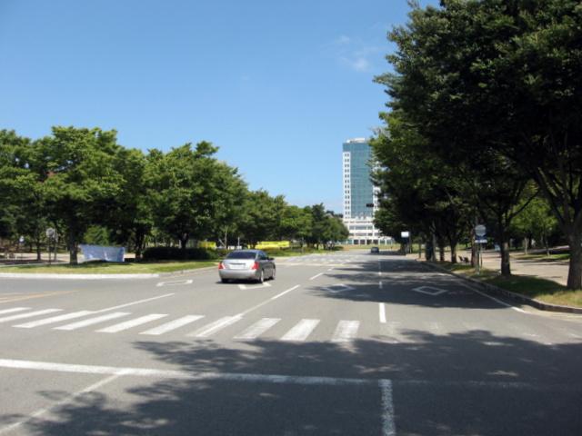 Университет Тэгу. Главная аллея
