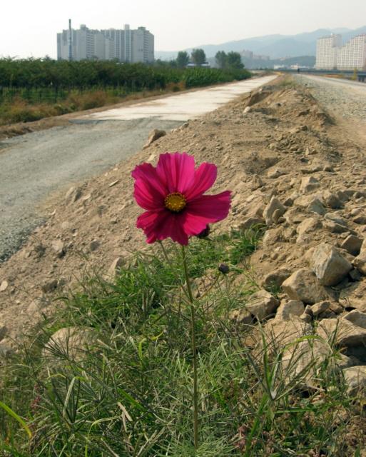 Цветок на дороге