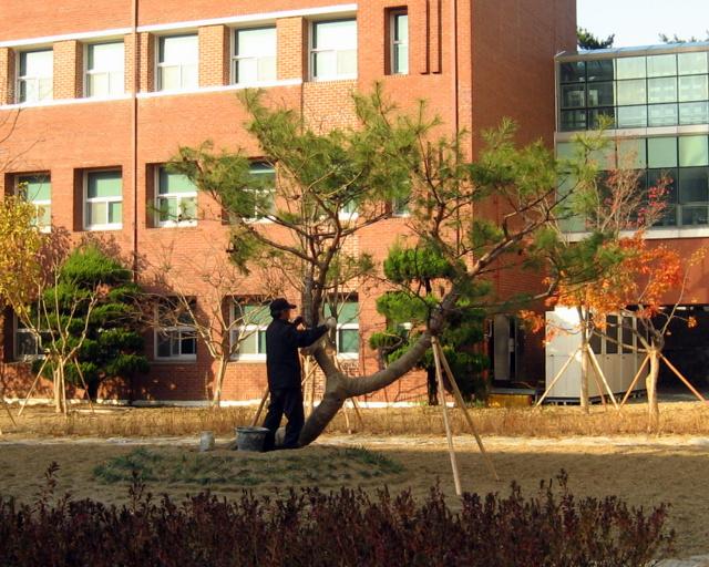 Реконструкция двора-11