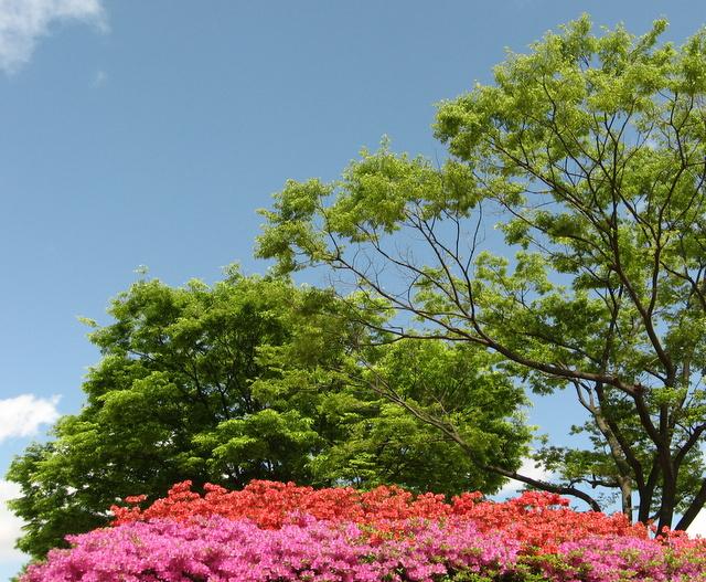Университет Тэгу, кампус, 1 мая