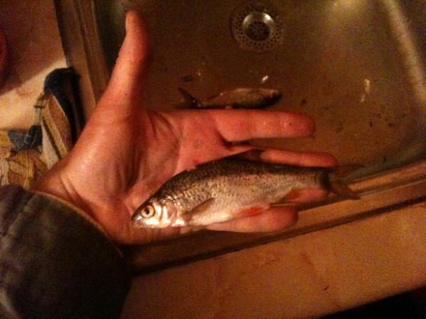 Рыбина заметно больше ладони