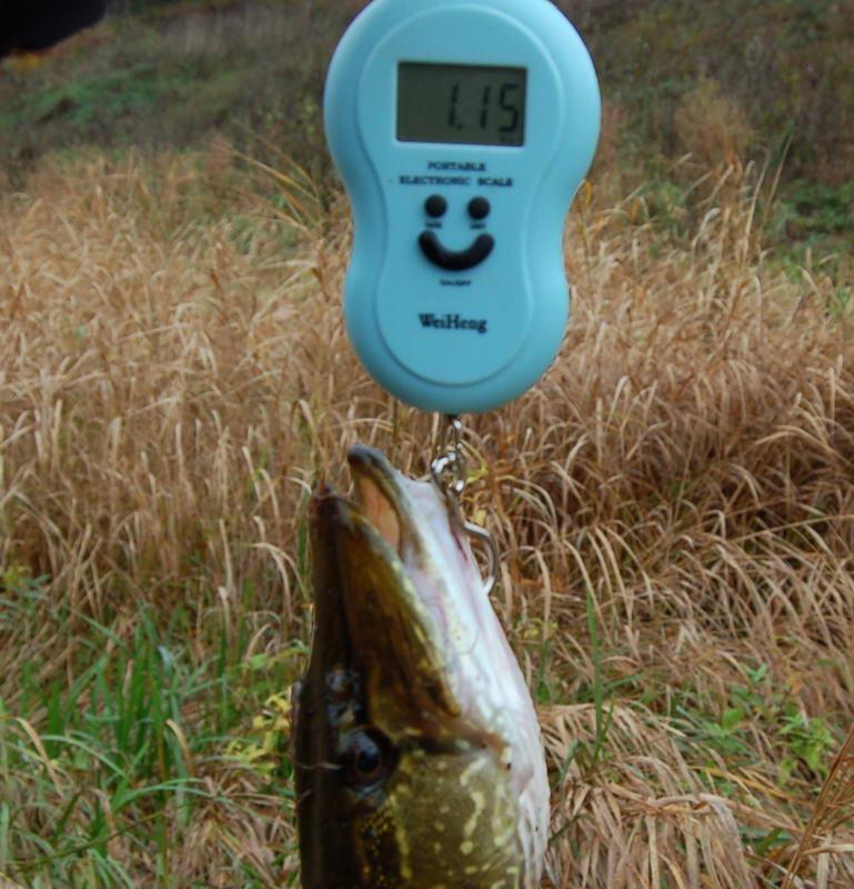 весы рыбацкие цена