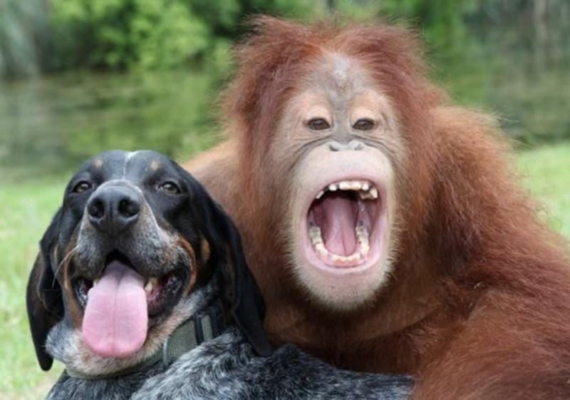 Фото и картинки обезьяны на собаках
