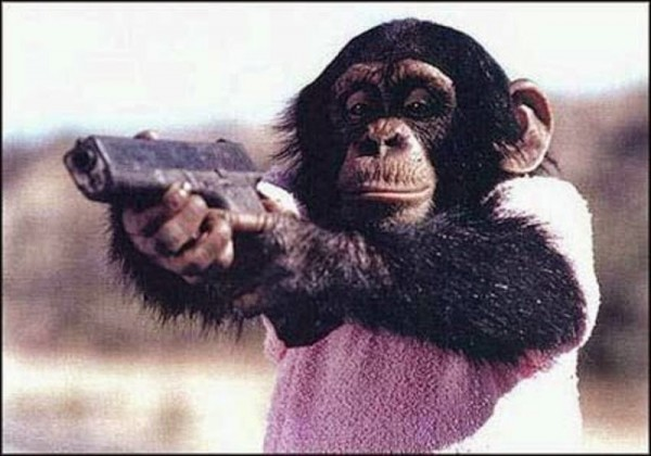 why monkeys throw their feces at humans Animals typically called as monkeys by the public are actually two very distinct sets of animals: what are actually old world monkeys and new world monkeys old world monkeys are demonstrably more closely related to apes (a class that includes humans) than they are to new world monkeys: old world monkeys and apes (and us humans.