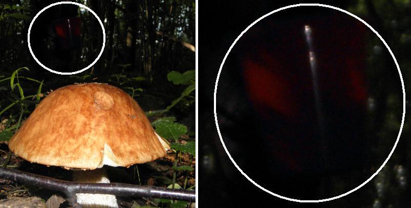 странное в лесу2