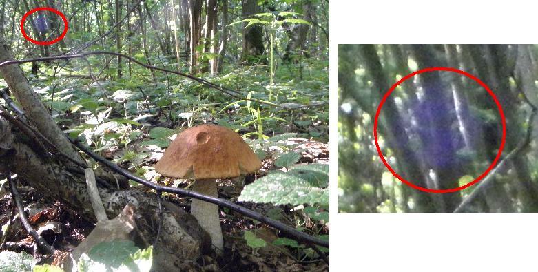 странное в лесу