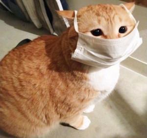 Носить маски надо!