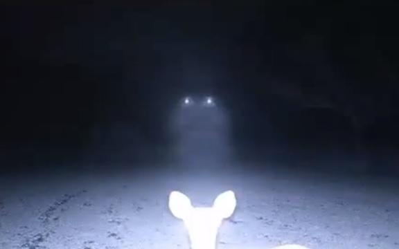 deer-ufo[1]