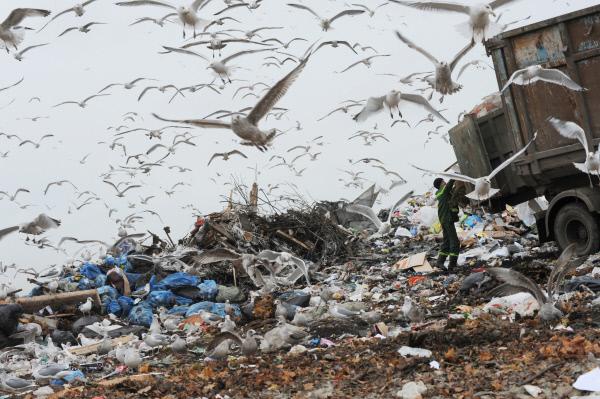 20181207_17-42-Фадеев ищет мусор в Telegram, а Архангельск - в Москве-pic3