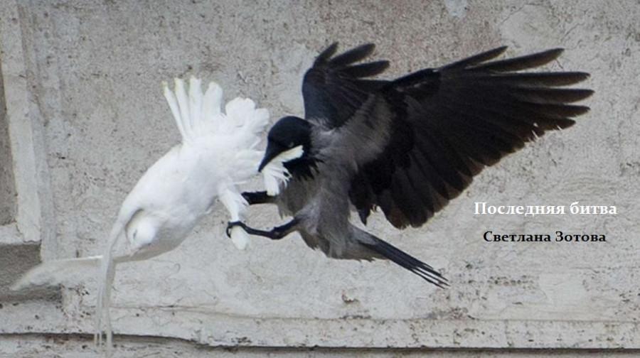 птица.jpg