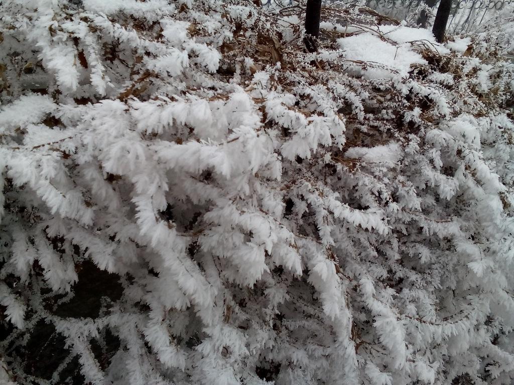 снег на растениях