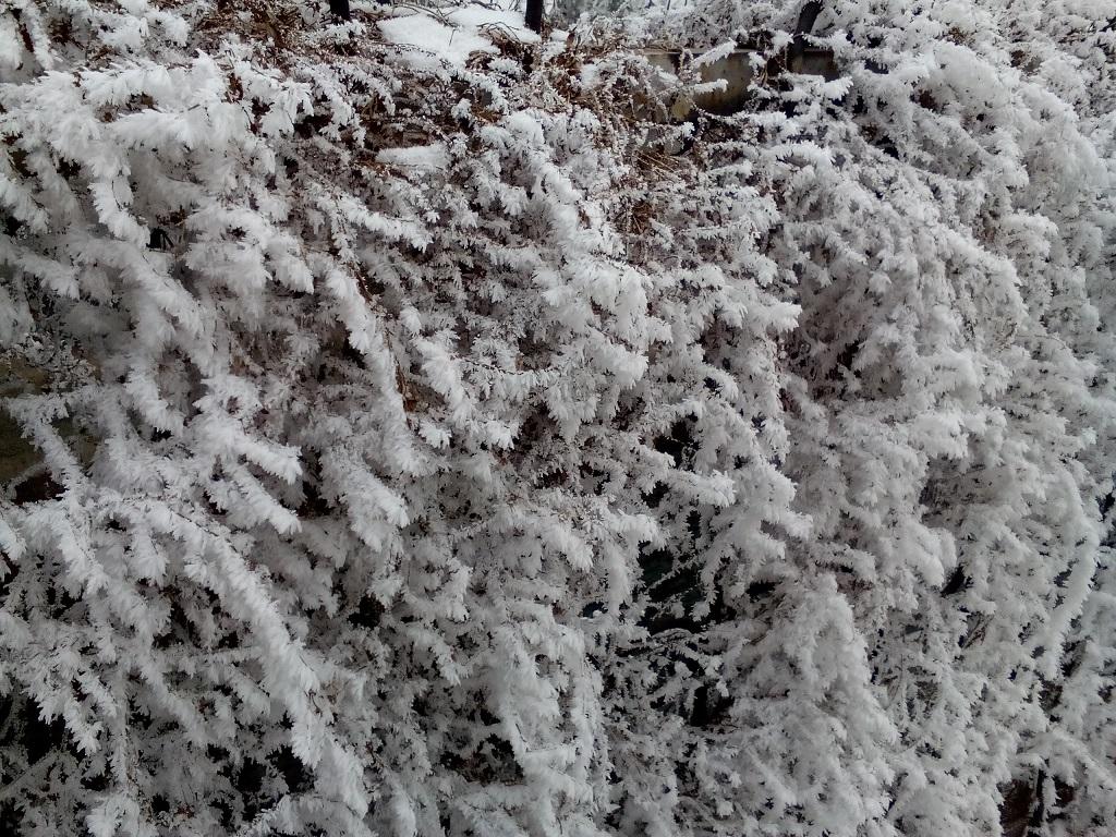 снежная изгородь