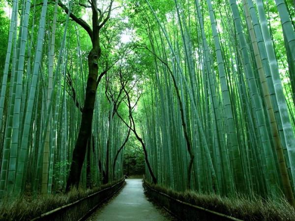 3-Бамбуковый лес Сагано в Японии