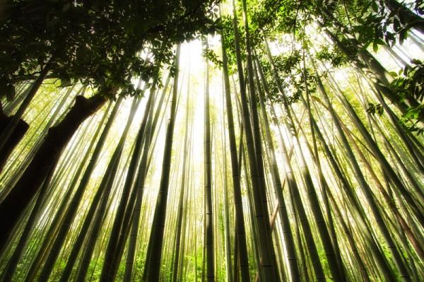 9-Бамбуковый лес Сагано в Японии
