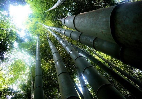 12-Бамбуковый лес Сагано в Японии