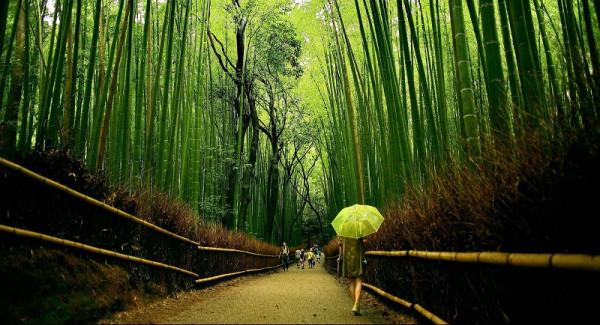 1-Бамбуковый лес Сагано в Японии