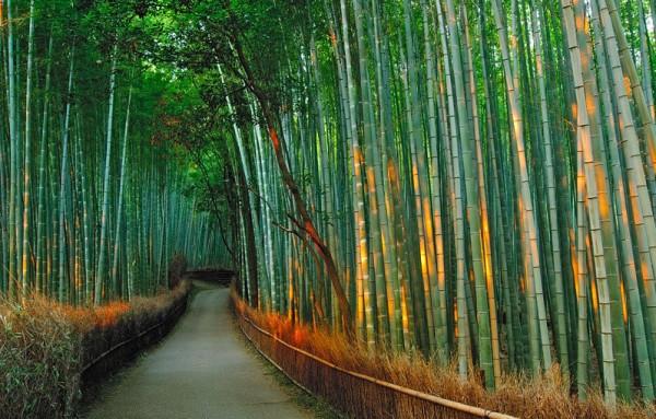13-Бамбуковый лес Сагано в Японии