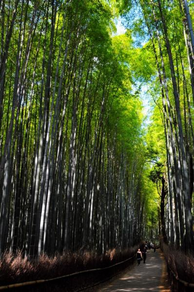 15-Бамбуковый лес Сагано в Японии