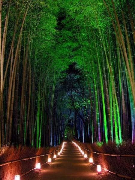 18-Бамбуковый лес Сагано в Японии. Вид ночью