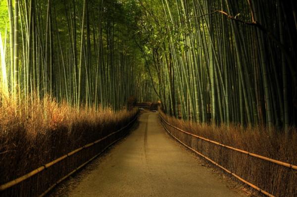 19-Бамбуковый лес Сагано в Японии
