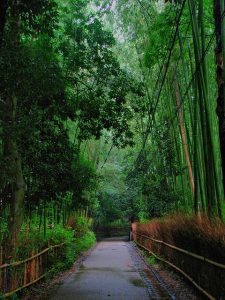 7-Бамбуковый лес Сагано в Японии