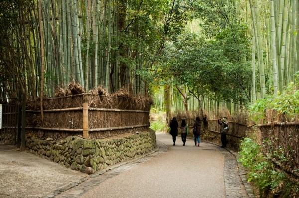 10-Бамбуковый лес Сагано в Японии