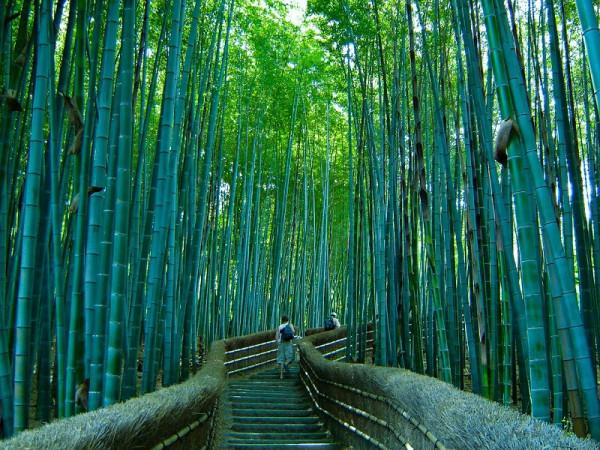 16-Бамбуковый лес Сагано в Японии