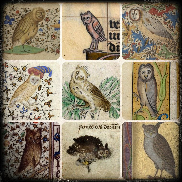 00001_-_collage-owl.jpg