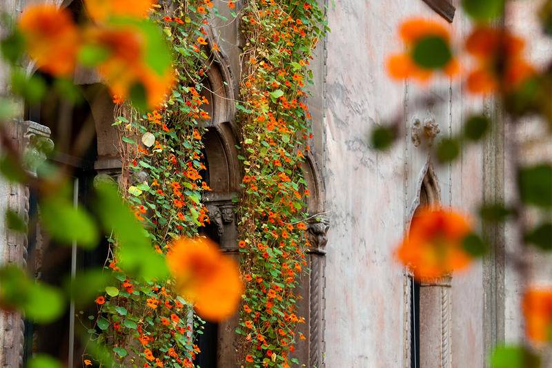 Landscape_Courtyard_Nasturtium_05.jpg