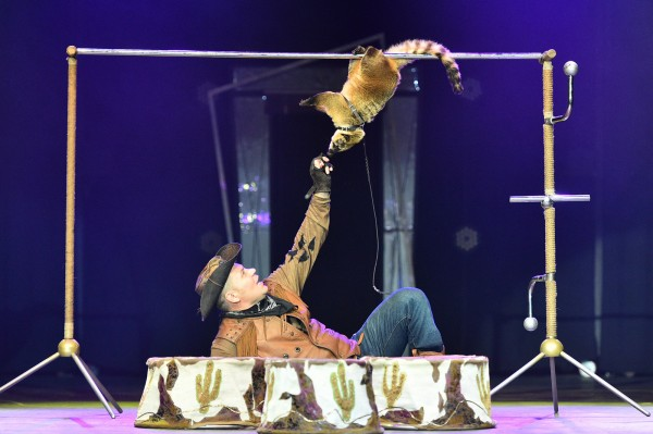 носухи в цирке
