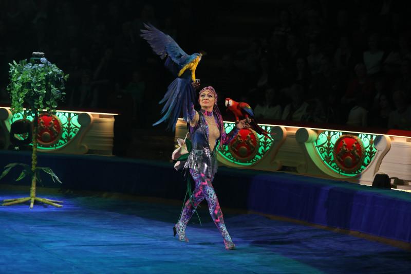 африканские попугаи в цирке