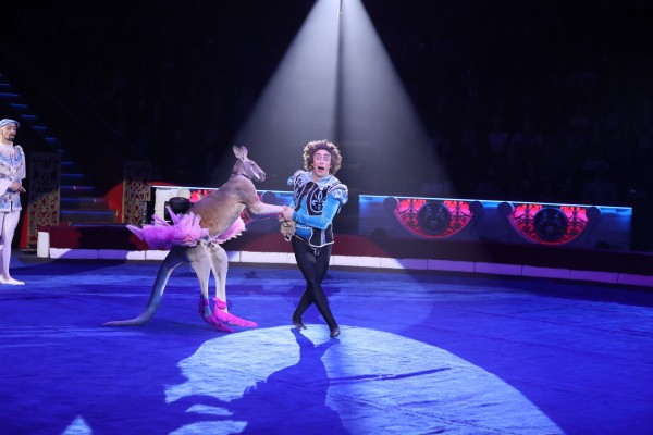 кенгуру в цирке Дарьи Костюк