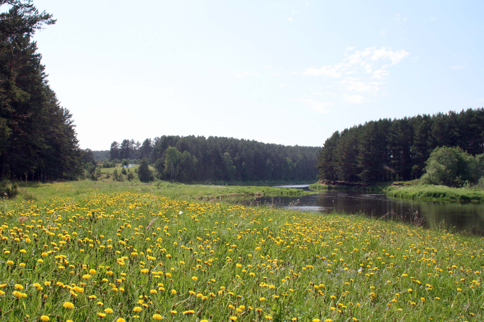 Возле деревни Давыдова